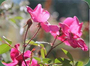 Blumen-CasaCucù, ferienwohnung am Bracciano See, Italien