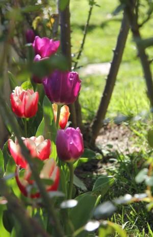 Primavera 2015 a CasaCucù